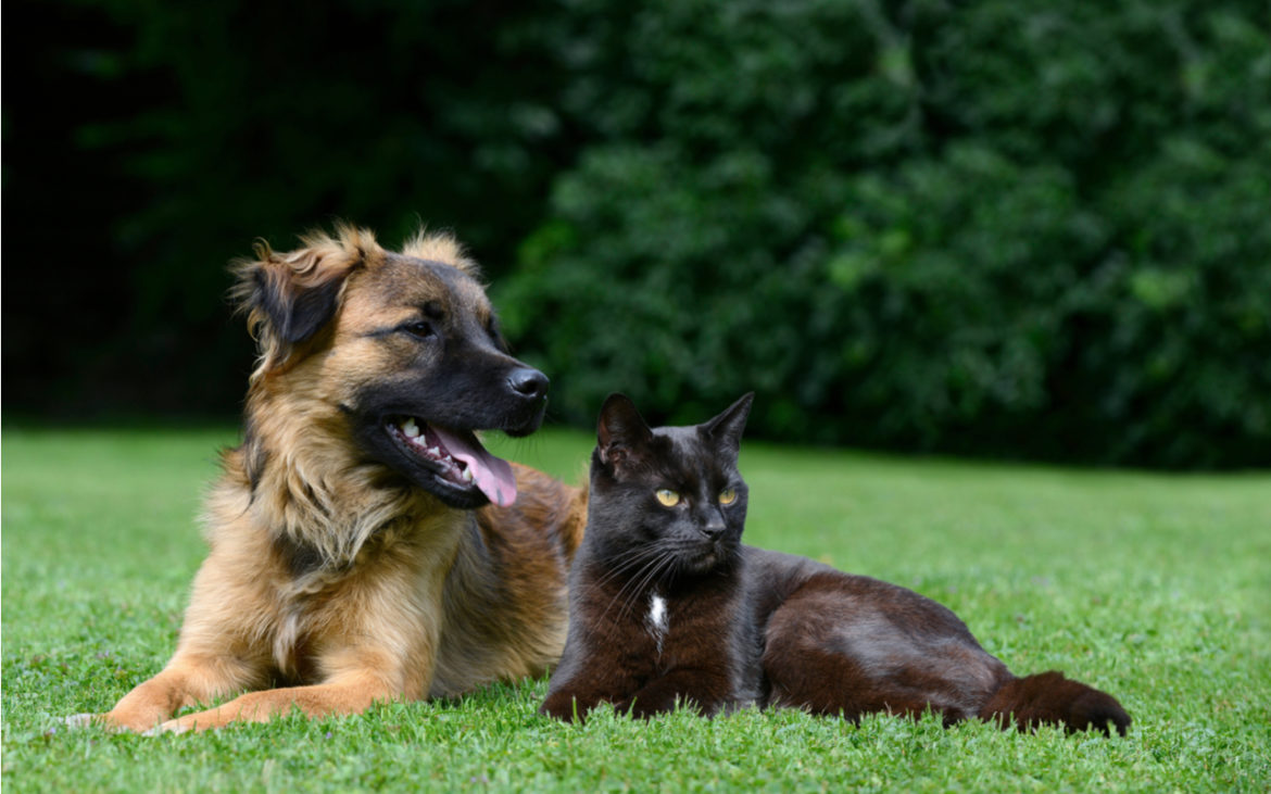 CBD for Dogs and Cats – Everything You Should Know