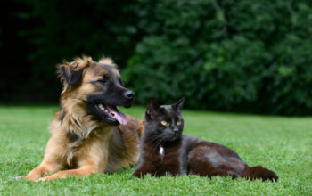 CBD for Dogs and Cats - Everything You Should Know